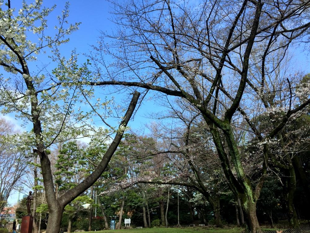 有栖川宮記念公園の都立中央図書館前