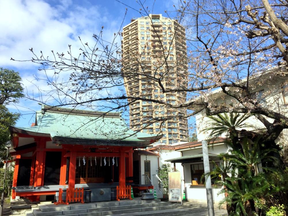 麻布氷川神社の桜